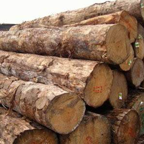 pine wood logs trader in Delhi